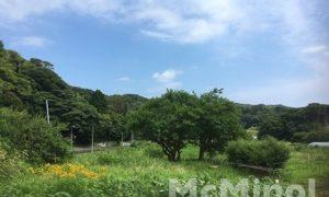 南伊豆アボカドプロジェクト – prologue