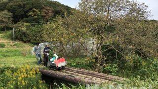 南伊豆アボカドプロジェクト – 第1回植樹祭 その1