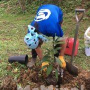 南伊豆アボカドプロジェクト 第2回植樹祭のお知らせ