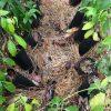 南伊豆アボカドPrj. - 第2回植樹祭は延期のご報告