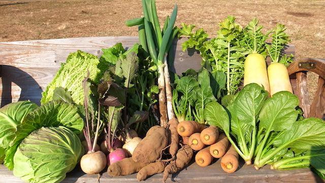 農薬や化学肥料を使わずに育てた野菜、土作りにこだわって育てた美味しい野菜をお届けします