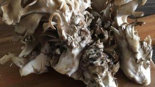 マイタケ maitake mushroom