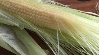 ヤングコーン baby corn