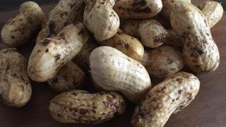 落花生(おおまさり) oomasari peanuts