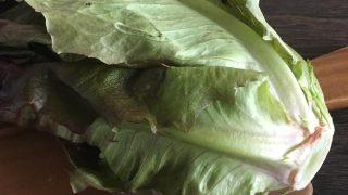 赤ロメインレタス red Romaine lettuce