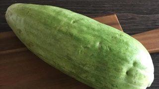 シロウリ shirouri gourd