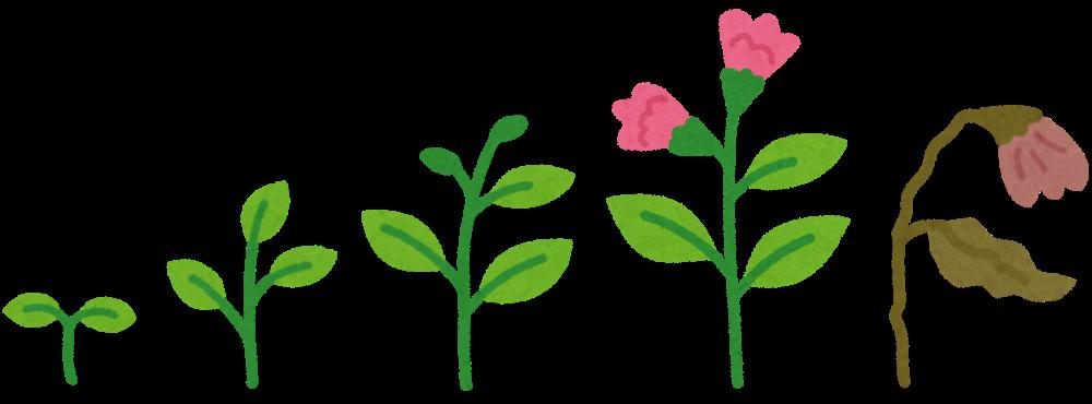 植物の一生