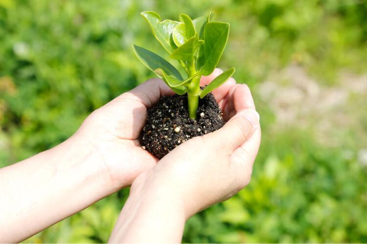 無農薬・化学肥料不使用